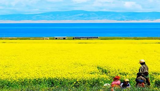 门源油菜花、祁连卓尔山、七彩丹霞、鸣沙山、茶卡盐湖、青海湖双高八日游