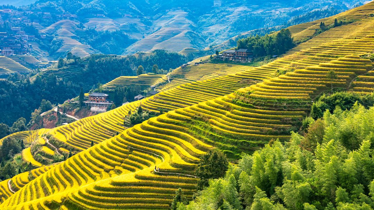 桂林、漓江、龙脊梯田双高6日游