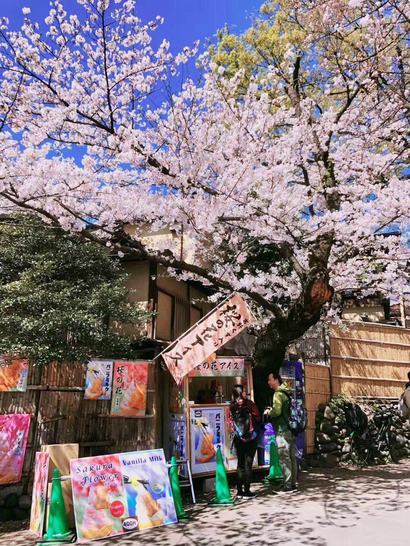 浪漫日本全景8日本之旅  毕业季