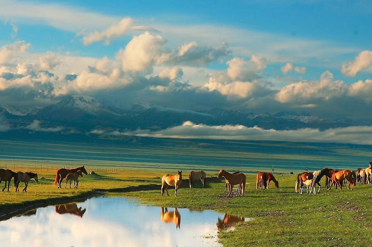 海拉尔、满洲里、呼伦贝尔大草原、根河湿地、186彩带河双飞6日
