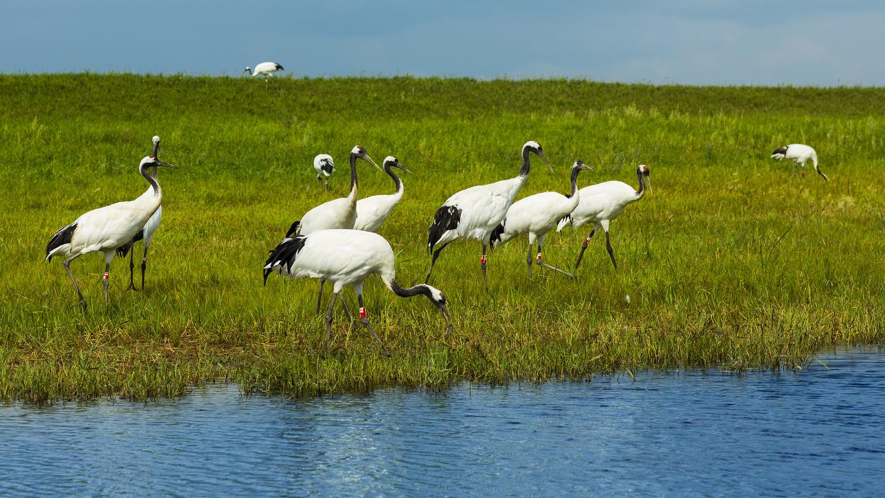 哈尔滨、五大连池、扎龙湿地、阿尔山、呼伦贝尔、齐齐哈尔全景双飞8日游