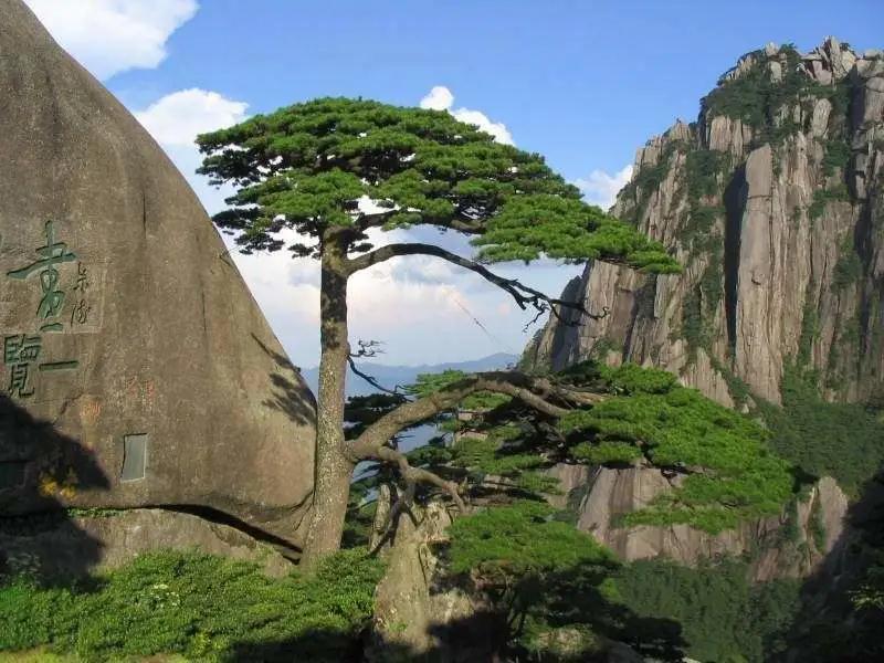 黄山、千岛湖双卧五日游