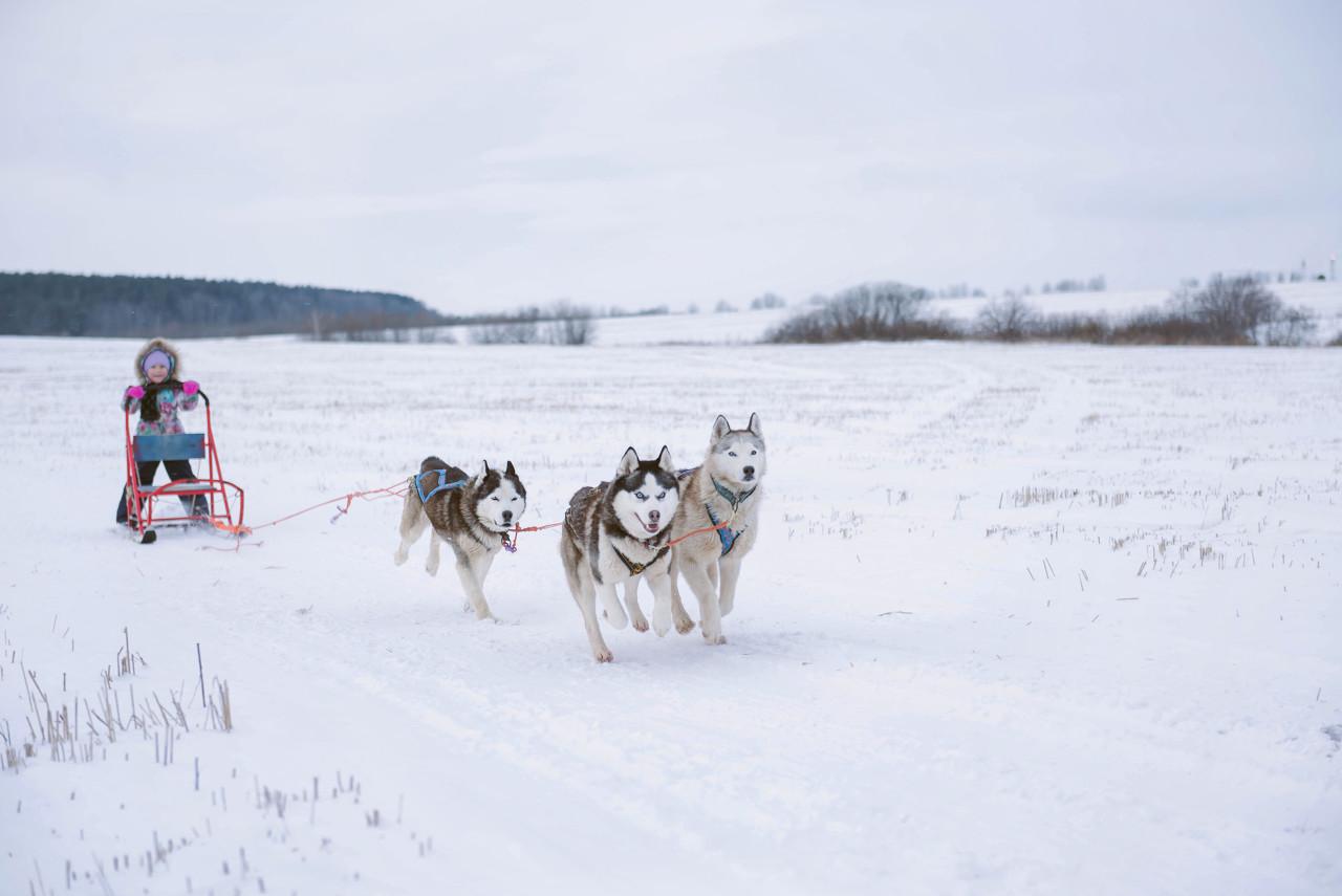 哈尔滨、中国雪乡、亚布力冰雪大环线双飞5日游