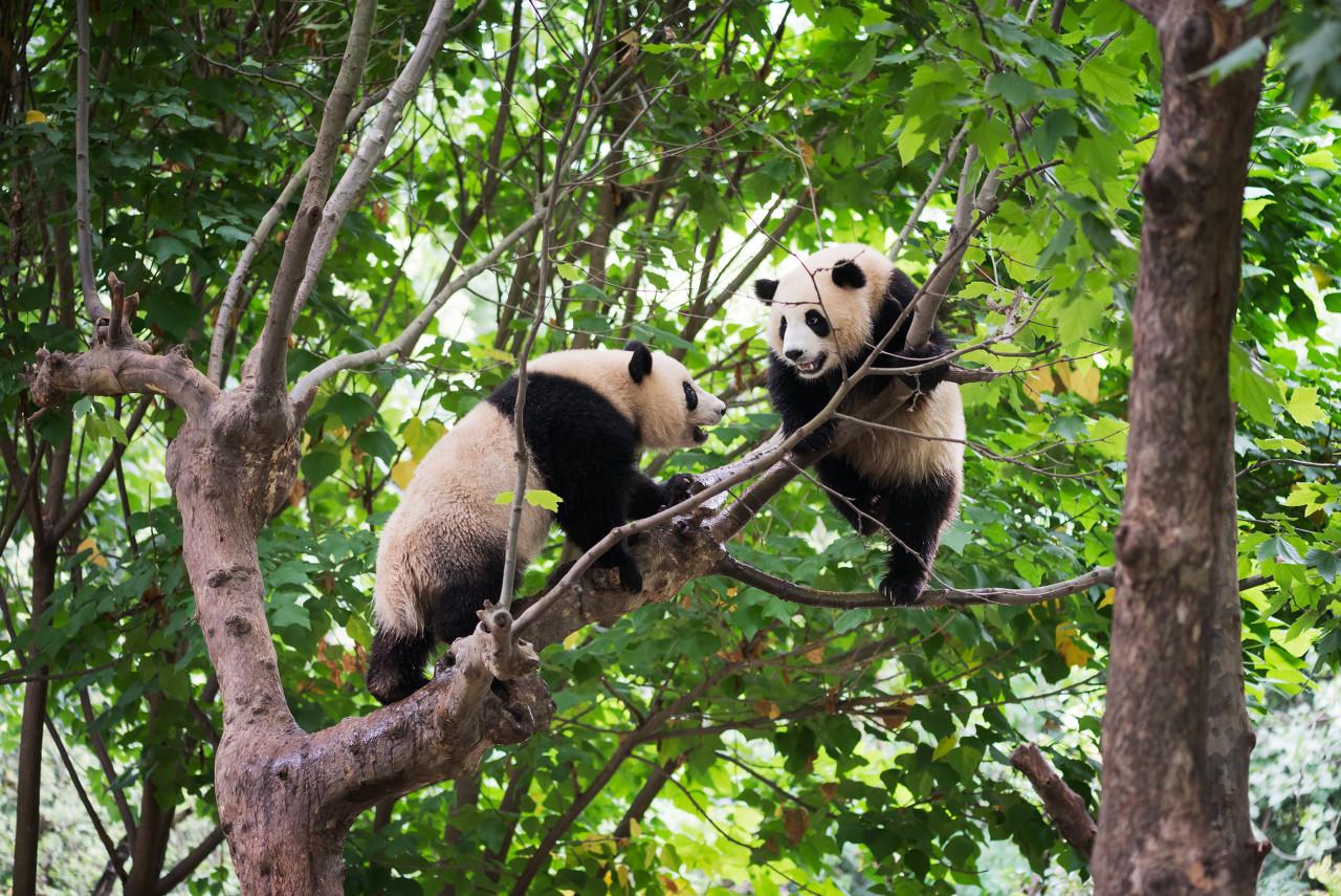 九寨沟、黄龙、熊猫乐园、都江堰、双高6日游